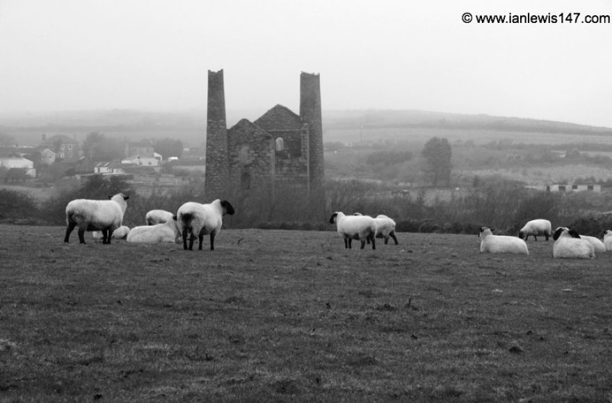 Tin mines and sheep