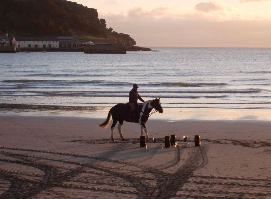 Horse on Marazion beach