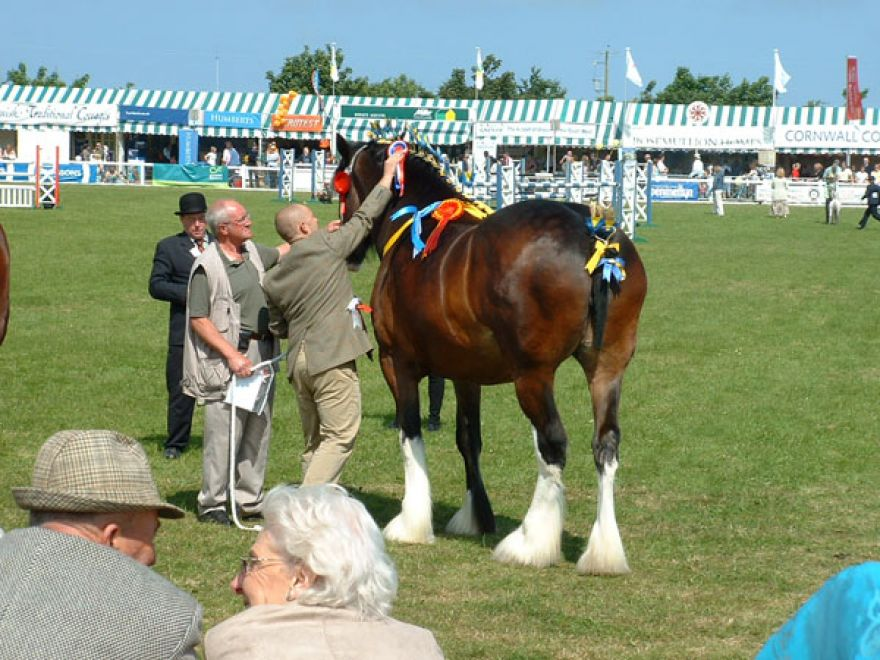 Shire Horse Best of the rest