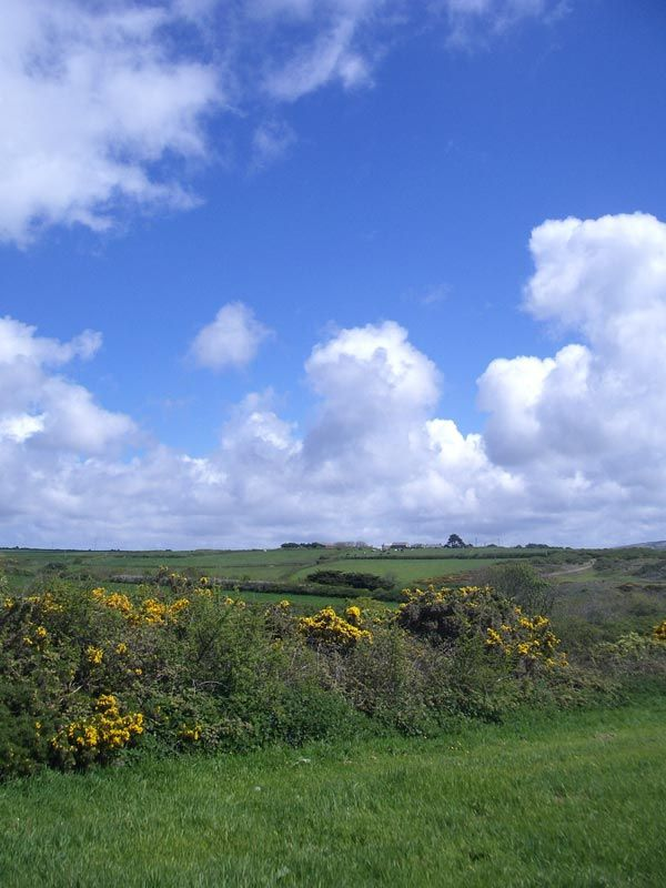 Blue Sky Over Fields