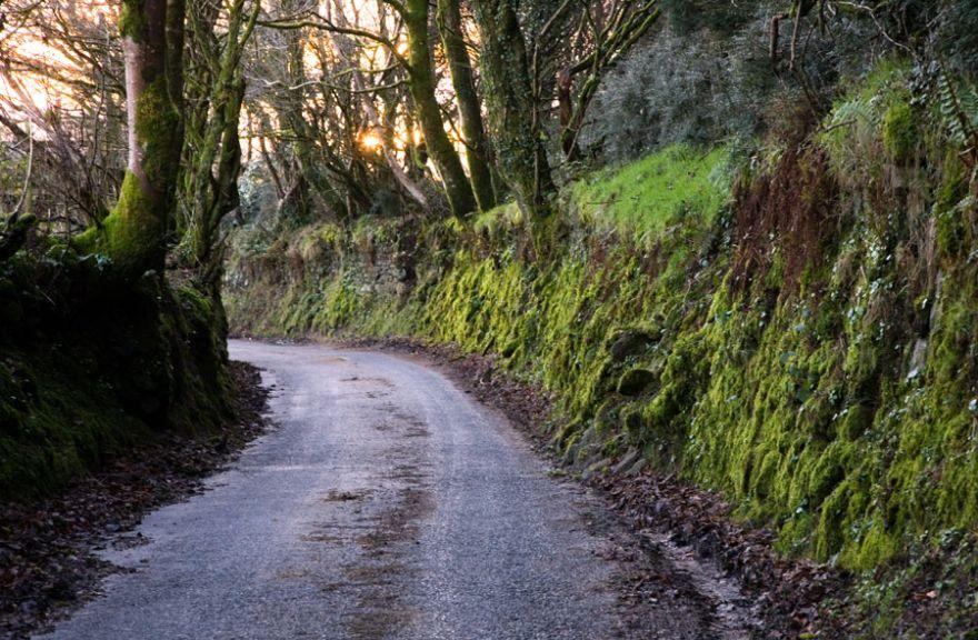 Country Lane - Bodmin Moor