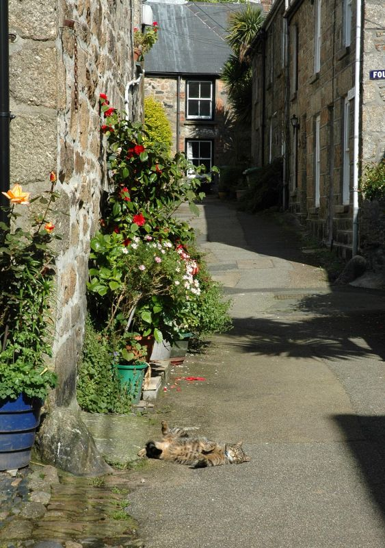 Fradgan Cat - Newlyn