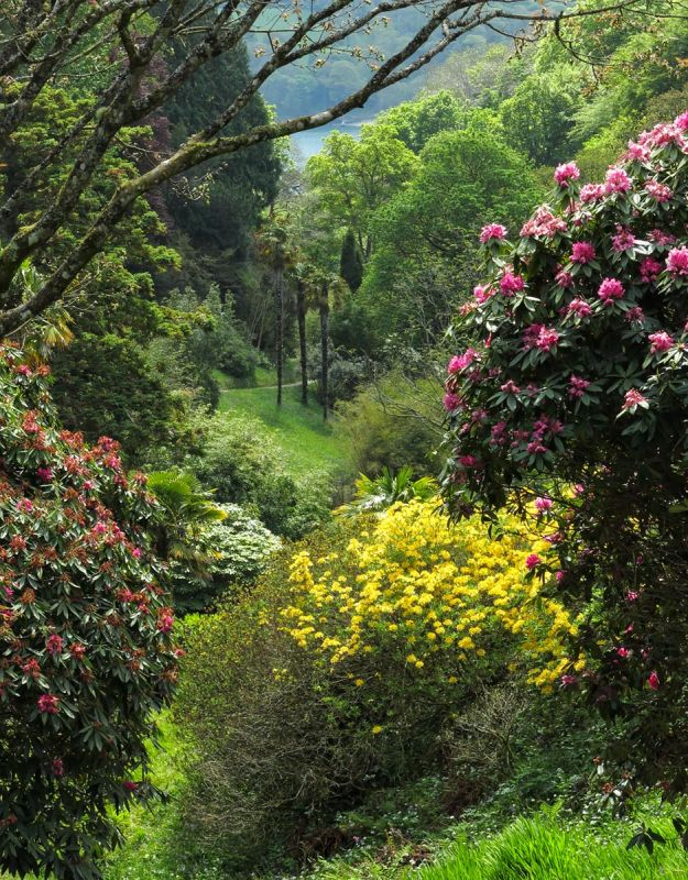 Glendurgan Garden - Spring view down the valley