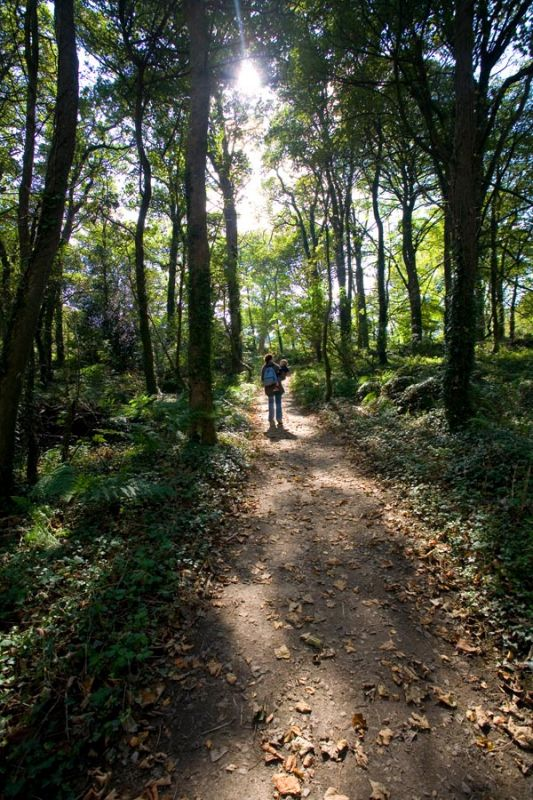 A Walk in Godolphin Woods