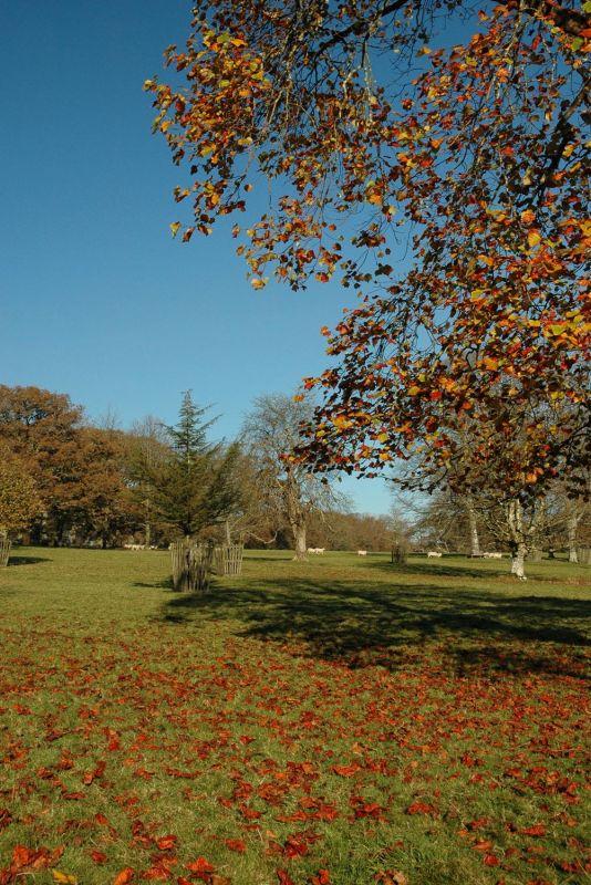 Autumn at Lanhydrock