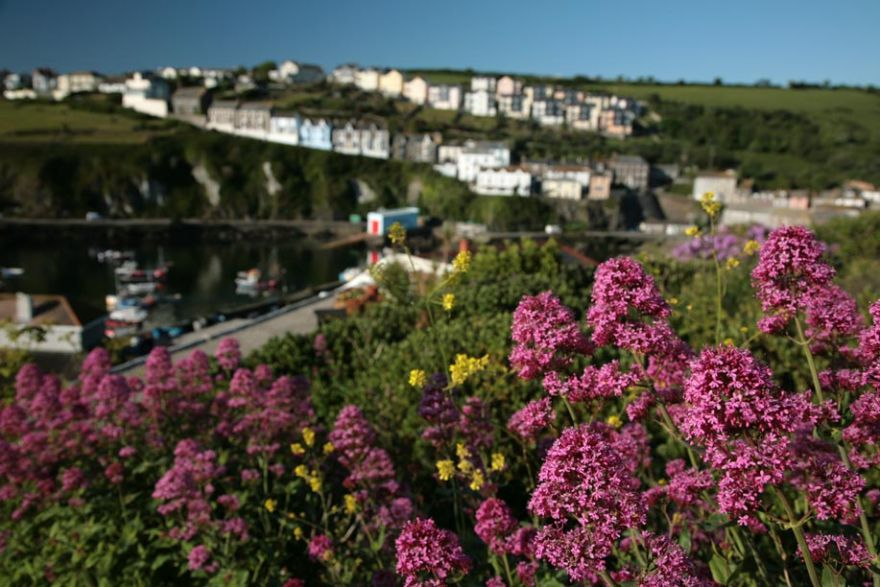 Mevagissey through the Flowers