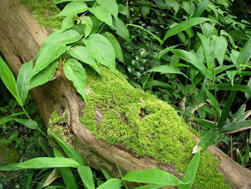 Moss on Tree