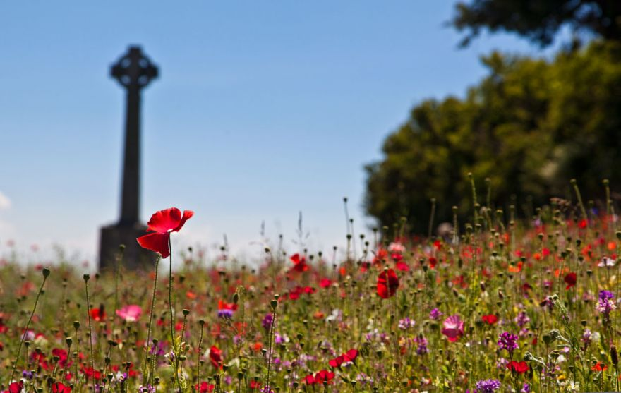 Padstow Poppies - War Memorial