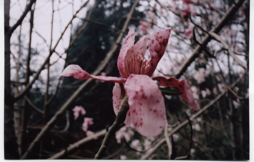 Flowering Shrub @ Heligan