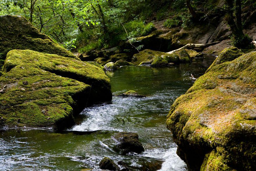 River Fowey - Golitha Woods
