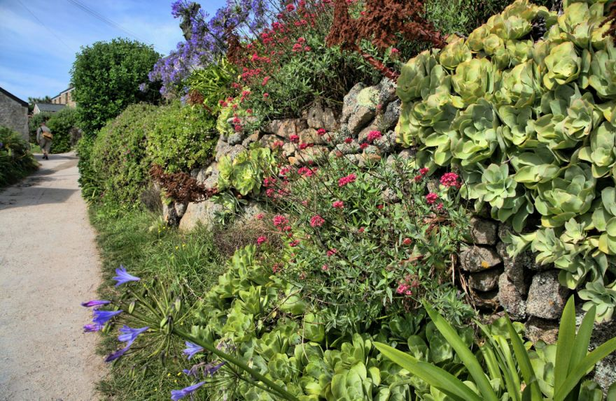 Scilly Isles hedgerow