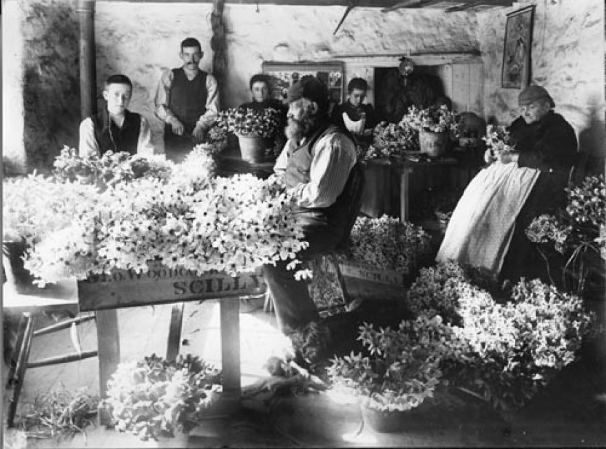 Packing Flowers in the Scillies - 19th Century