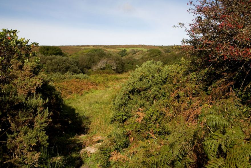 West Cornwall Scrubland