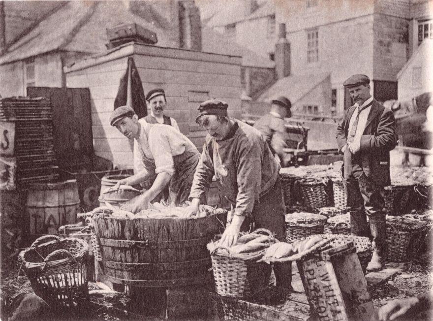 Packing mackerel - St Ives - 1900s