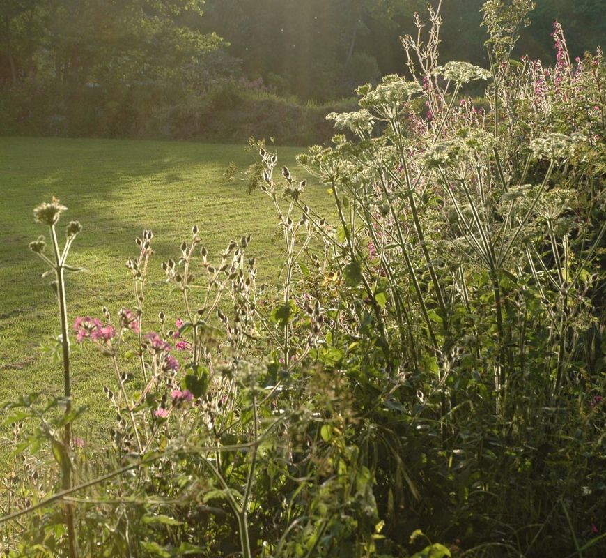 Summer's Evening Hedgerow
