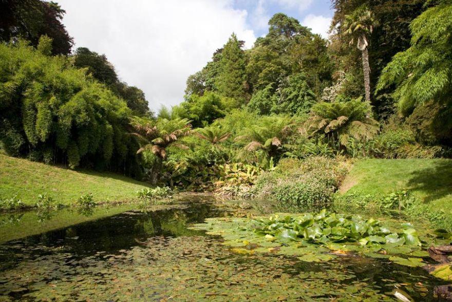 Trebah Gardens - Lilly Pond