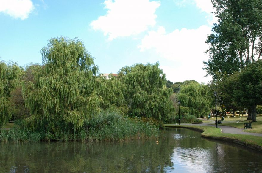 Willows in Trenance Gardens